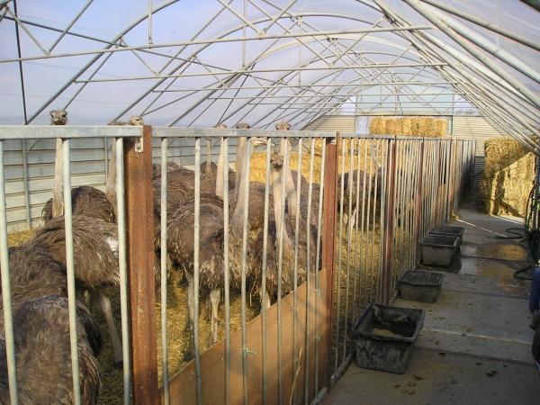 Struisvogelfarm overkapt